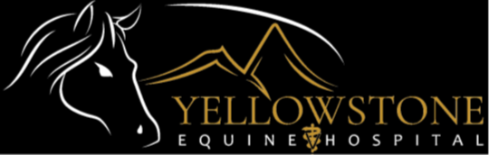 Yellowstone Equine Hospital | Dr. Ted Vlahos, Cody, Wyoming & Billings, Montana